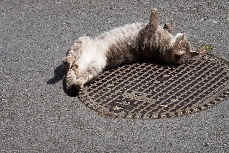 cat-2418014_960_720