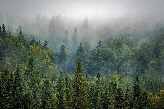 mlha nad lesem