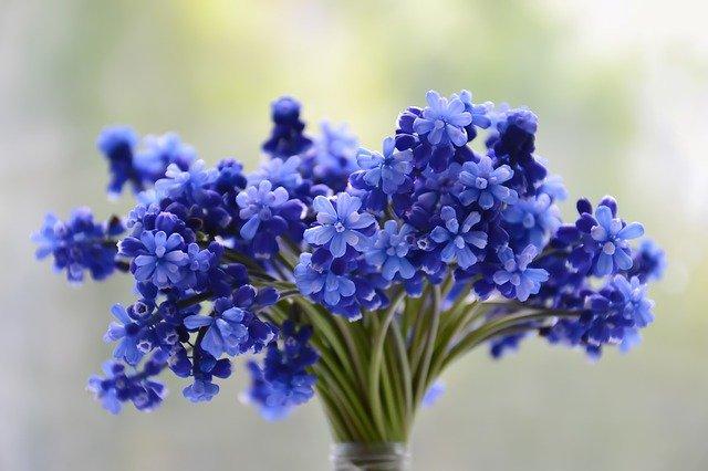 modrá kytička.jpg