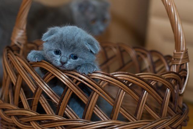 koťátko v košíku